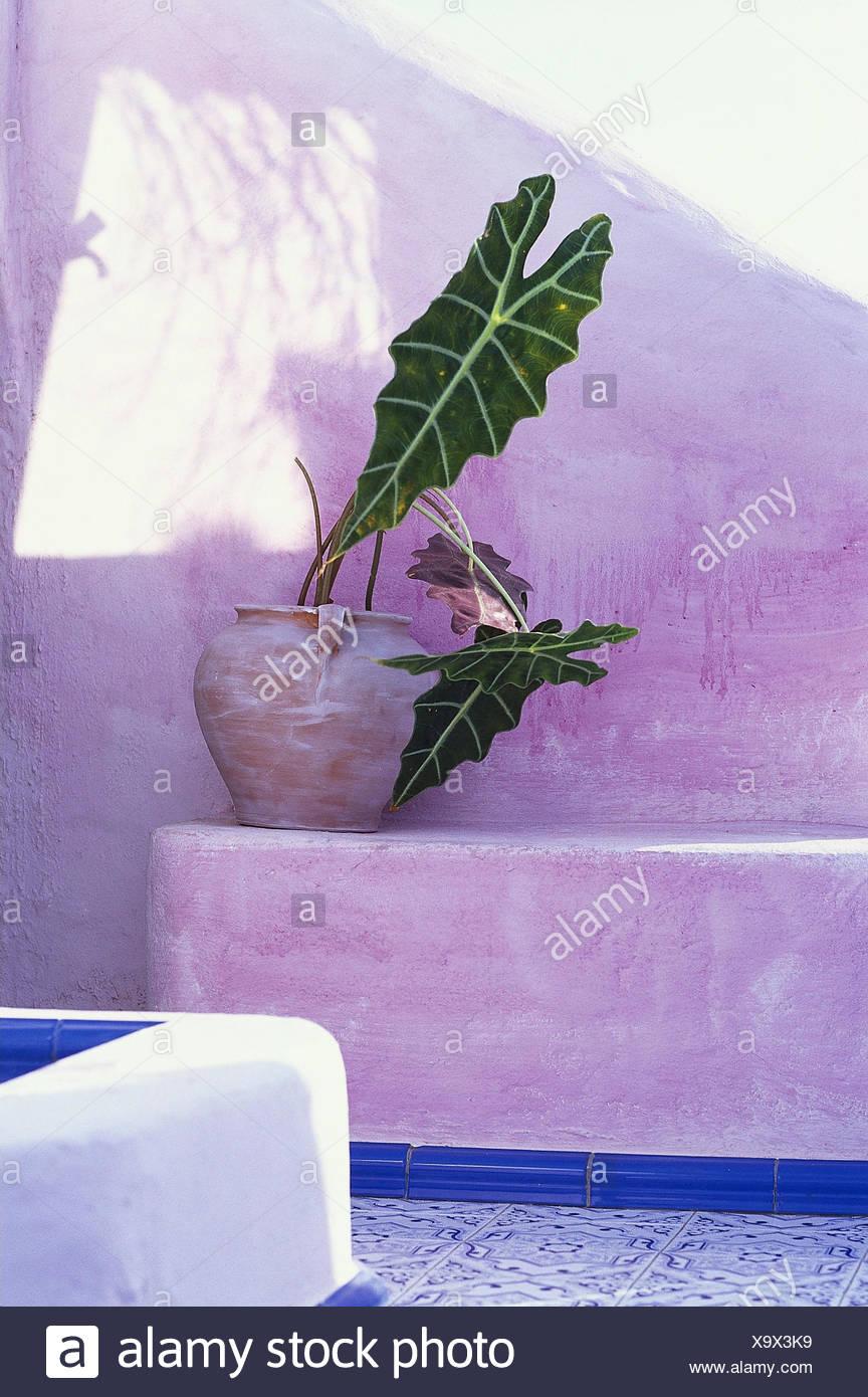 terrasse, wehrmauer, bank, detail, grüne pflanze draußen, ibiza
