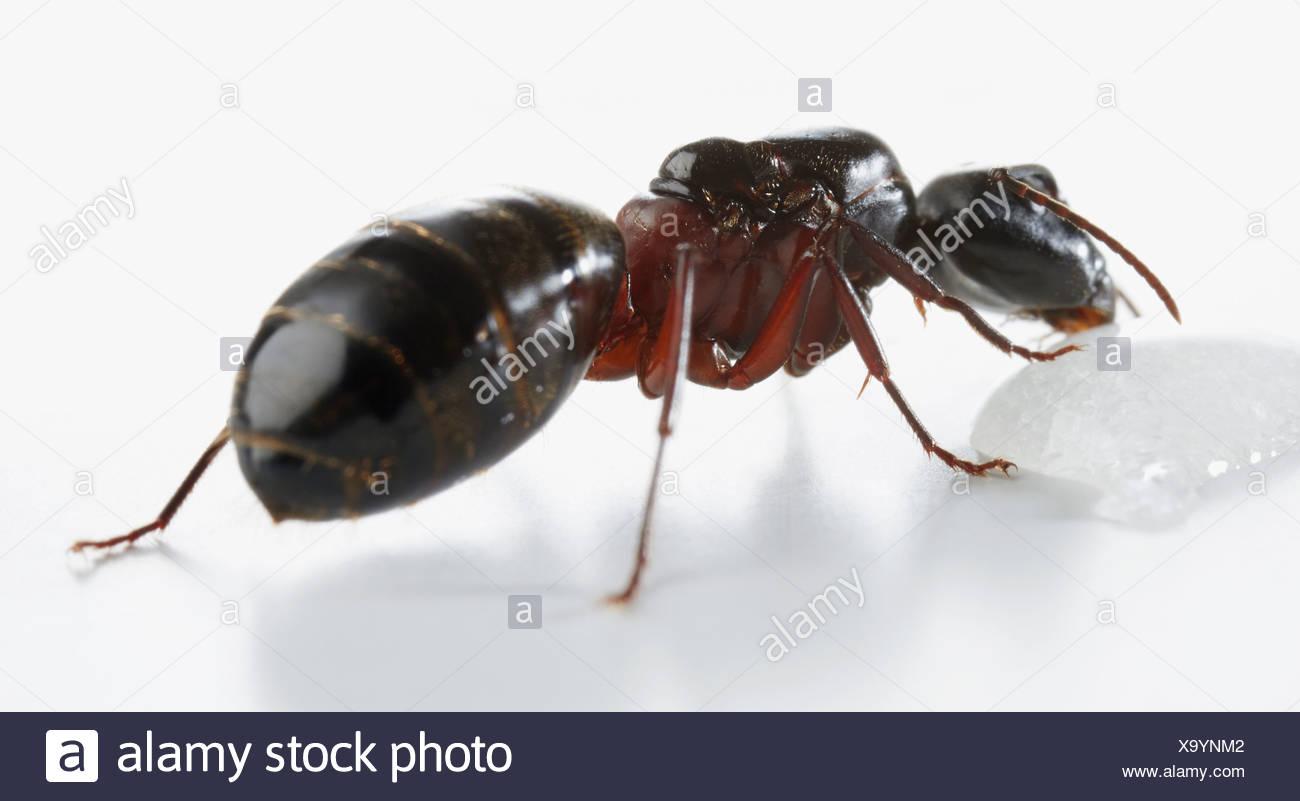 Ziemlich Ameisen Färbung Seite Galerie - Dokumentationsvorlage ...