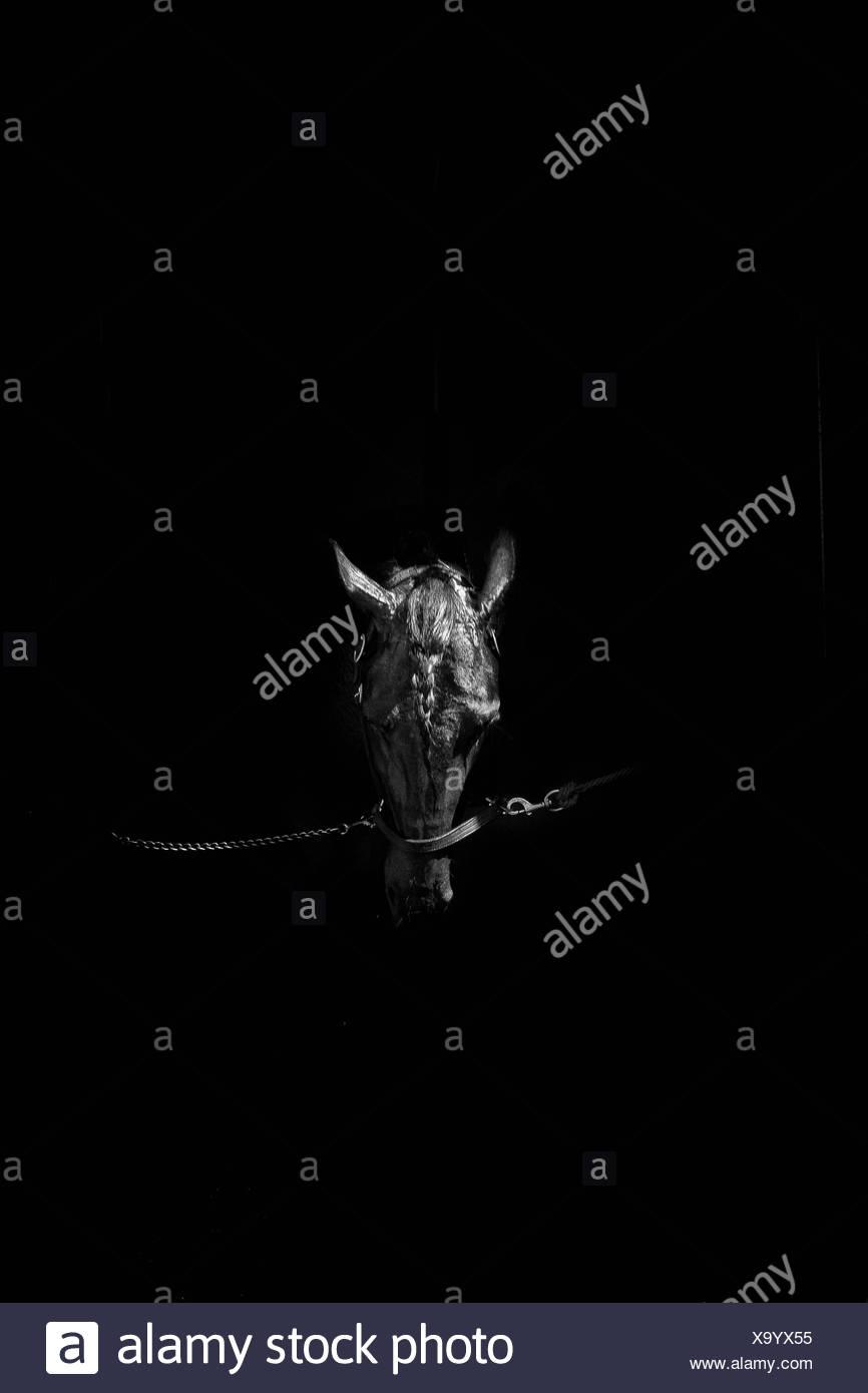 Pferd im dunklen Stall Stockbild