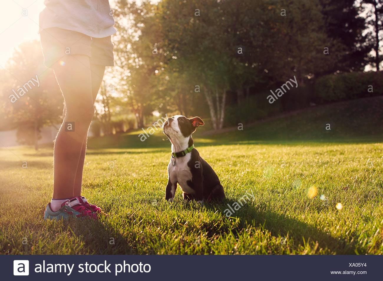 Taille abwärts von Mädchen Unterricht Boston Terrier Welpen sitzen Stockbild