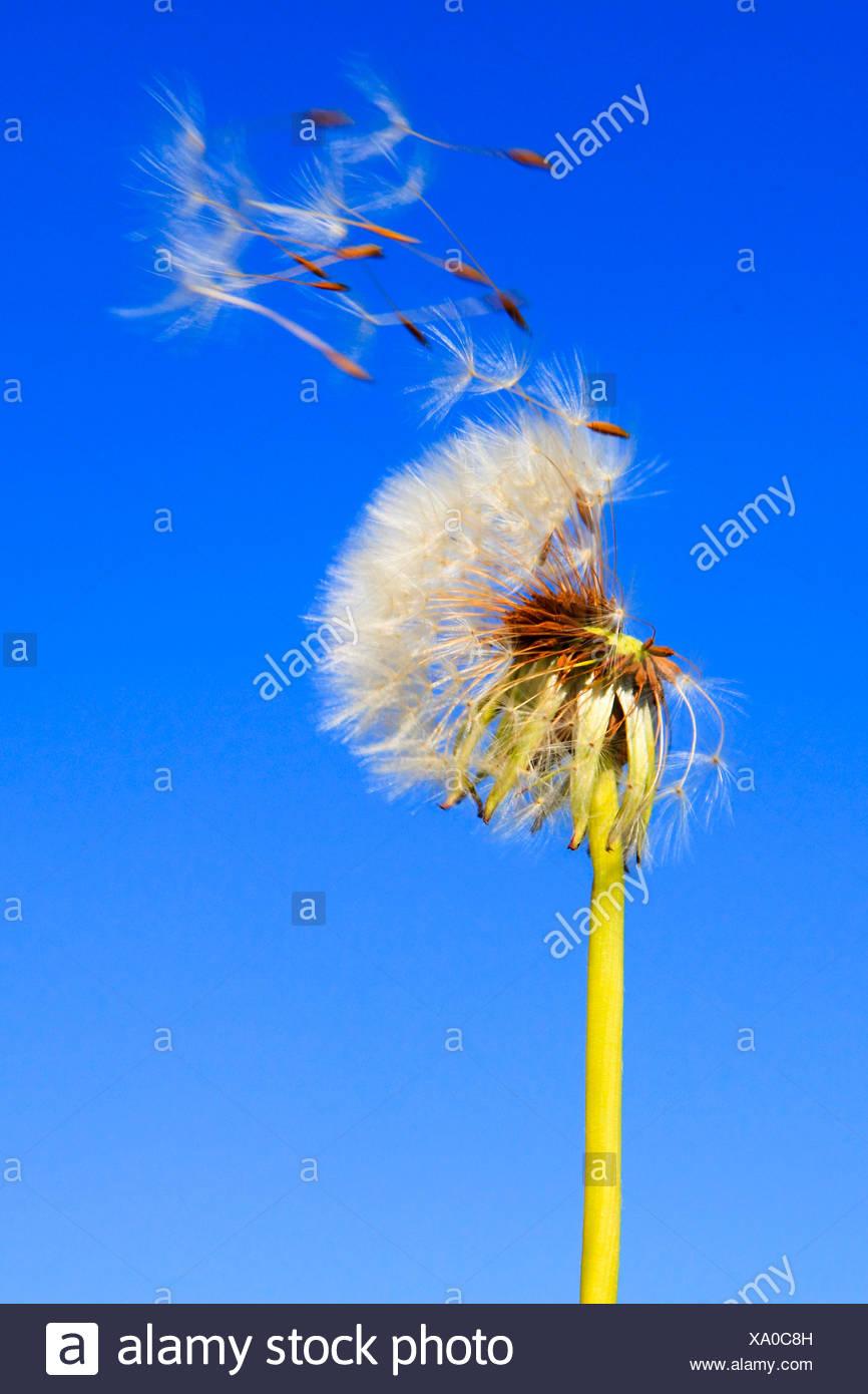 fliegen sperma pics