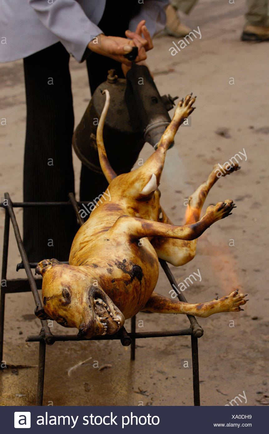 Hunde Essen China