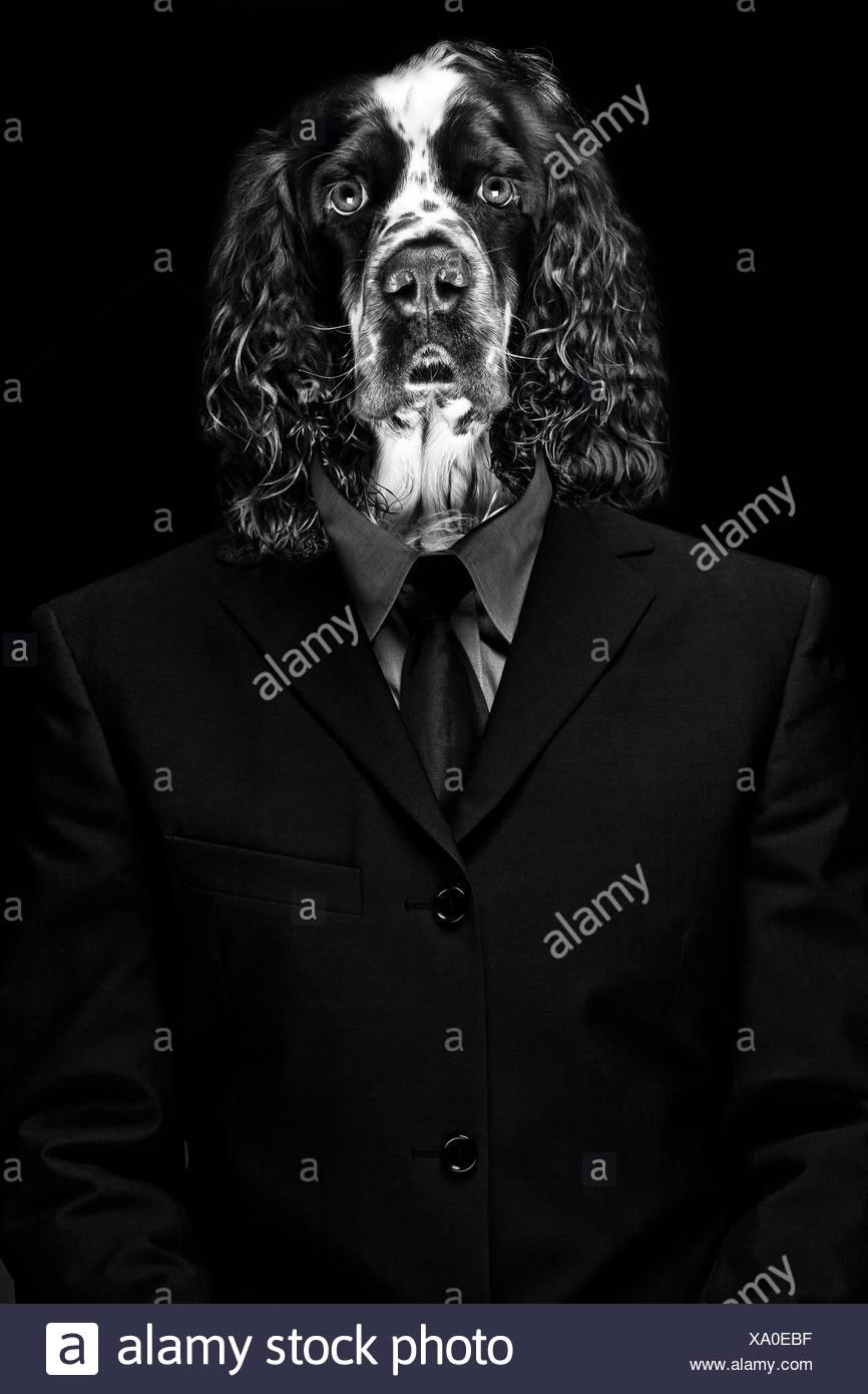 Reifer Mann mit Hund Gesicht vor schwarzem Hintergrund Stockbild