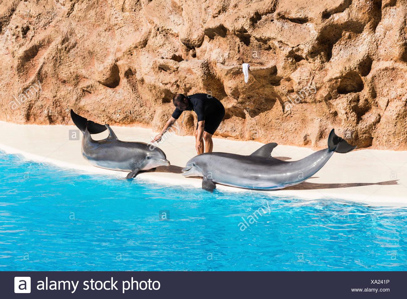 Delphin Show Zoo Loro Parque, Puerto De La Cruz, Santa Cruz De Tenerife, Teneriffa, Kanarische Inseln, Spanien Stockbild
