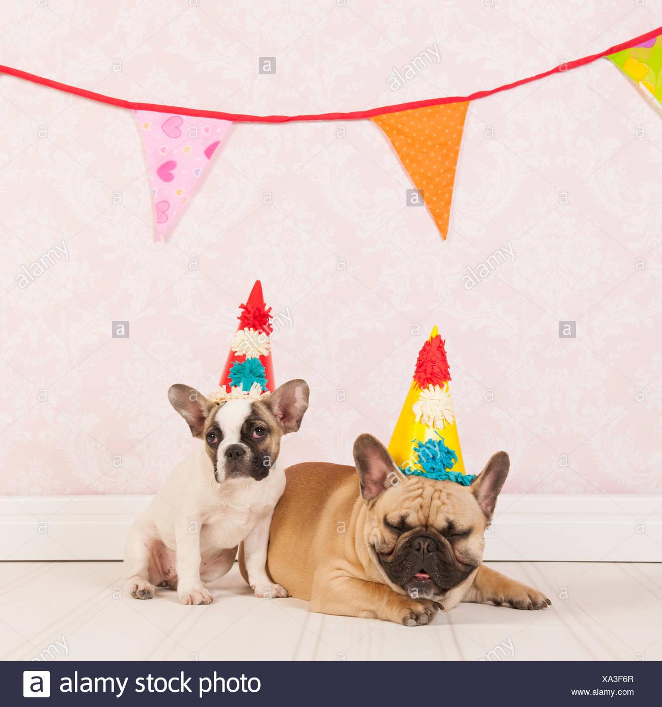 Geburtstag Hunde Stockfoto Bild 281590255 Alamy