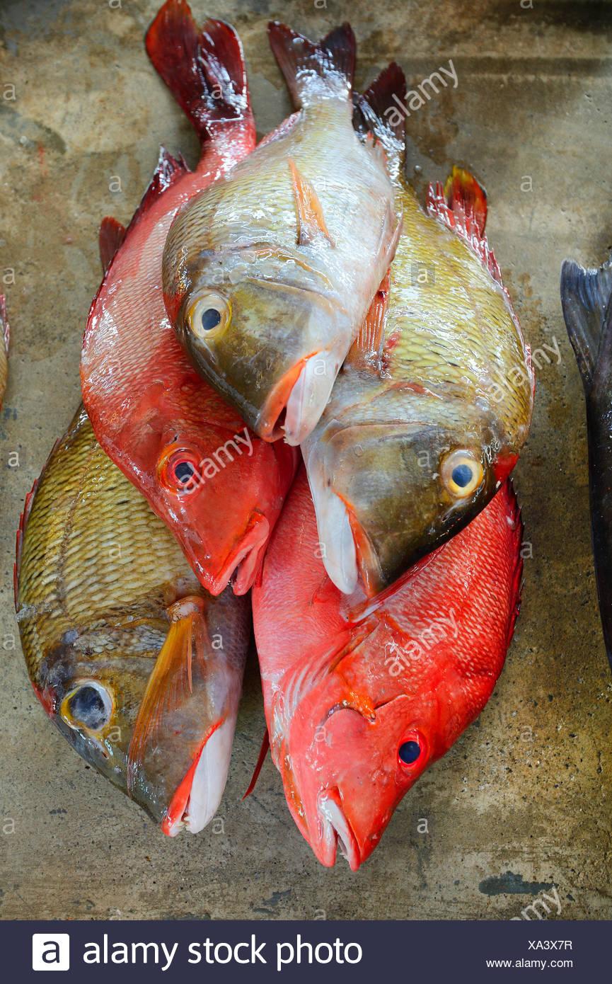 Frisch Gefangene Fische Zum Verkauf, Fischmarkt Im Sir Selwyn Selwyn Clarke Markt in Vicoria, Seychellen, Mahe | frische Fische fo Stockbild