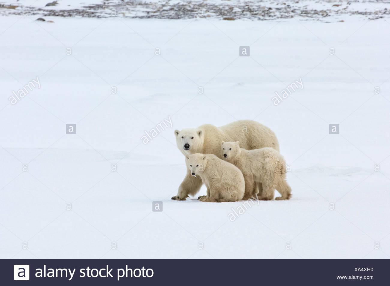 Cute Wild Animal Baby Stockfotos & Cute Wild Animal Baby Bilder ...
