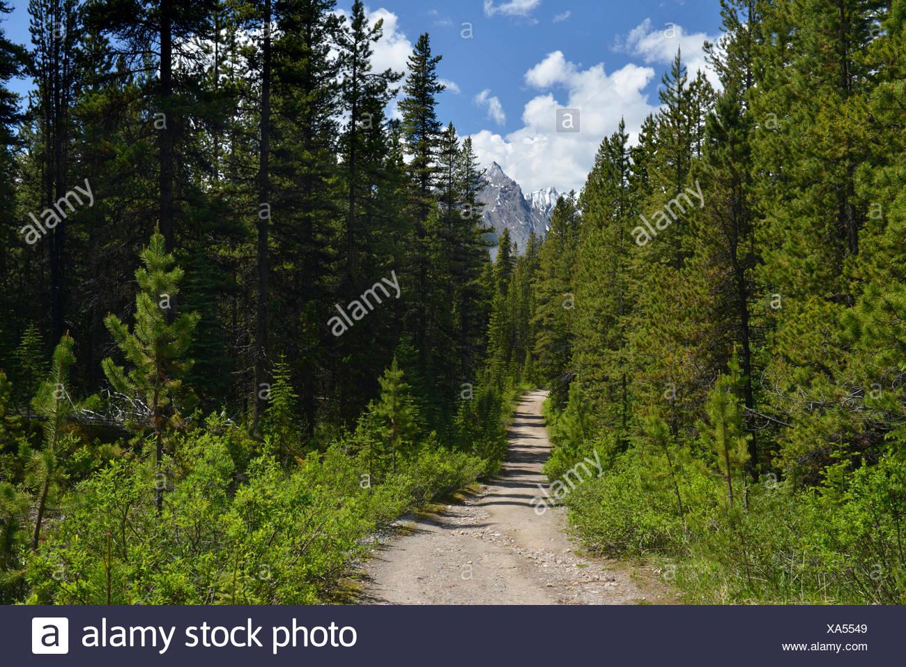 Blick von der Weg hinauf zur kahlen Hügel, Kanadische Rockies Stockbild