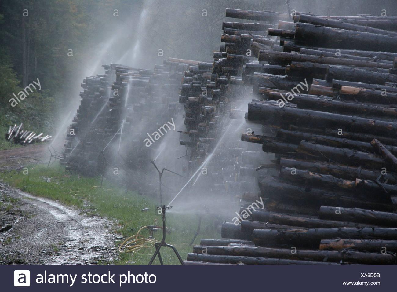 Baumstämme, die bewässert werden, um frisch, noch links halten über vor den Stürmen Kyrill und Lothar, Deutschland Stockbild