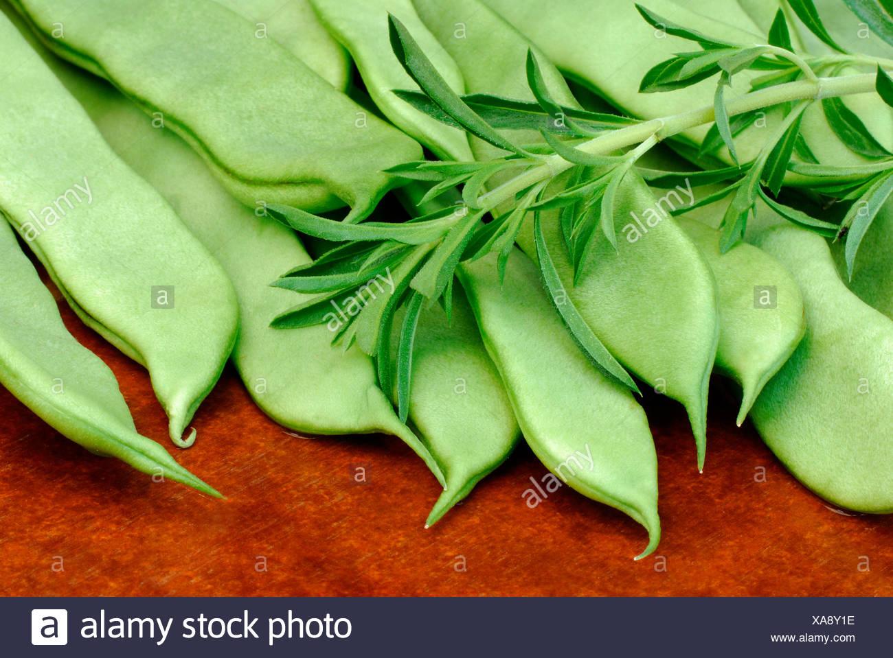 Bohnen und Bohnenkraut Stockbild