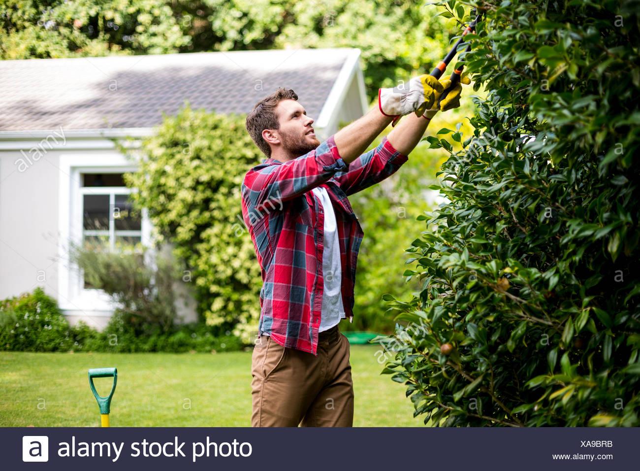 Mann trimmen Pflanzen im Garten Stockbild