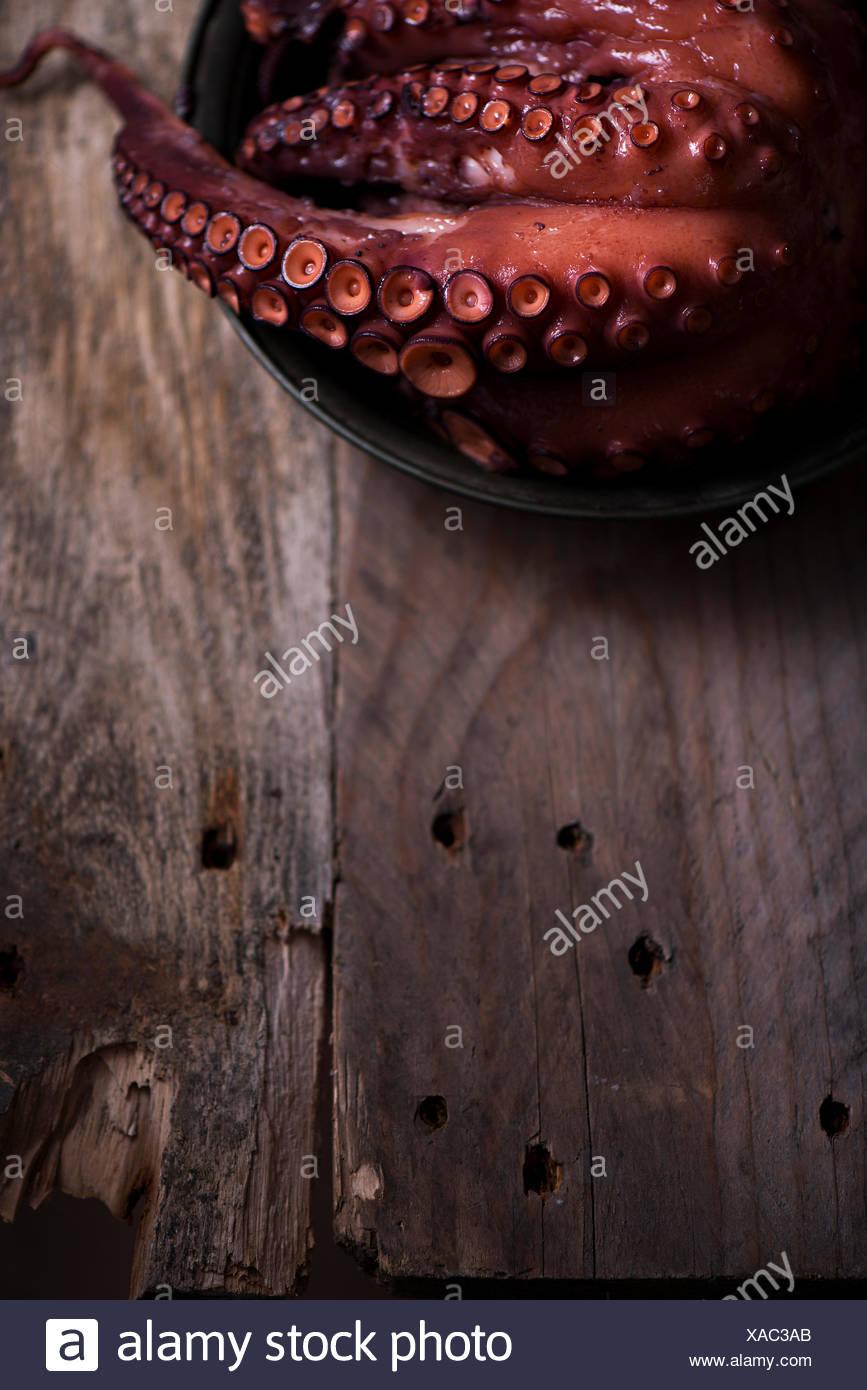Ein Octopus tentacle Stockbild