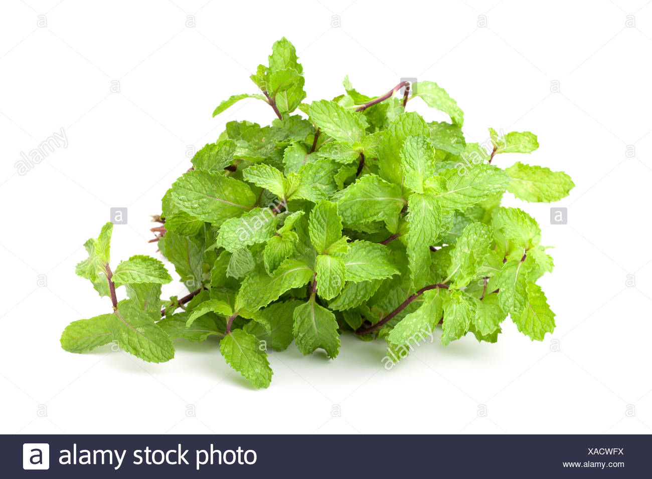 Kuche Minze Oder Marsh Mint Stockfoto Bild 281795918 Alamy