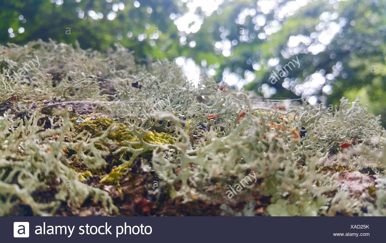 Blick auf Bizarre Moss Stockbild