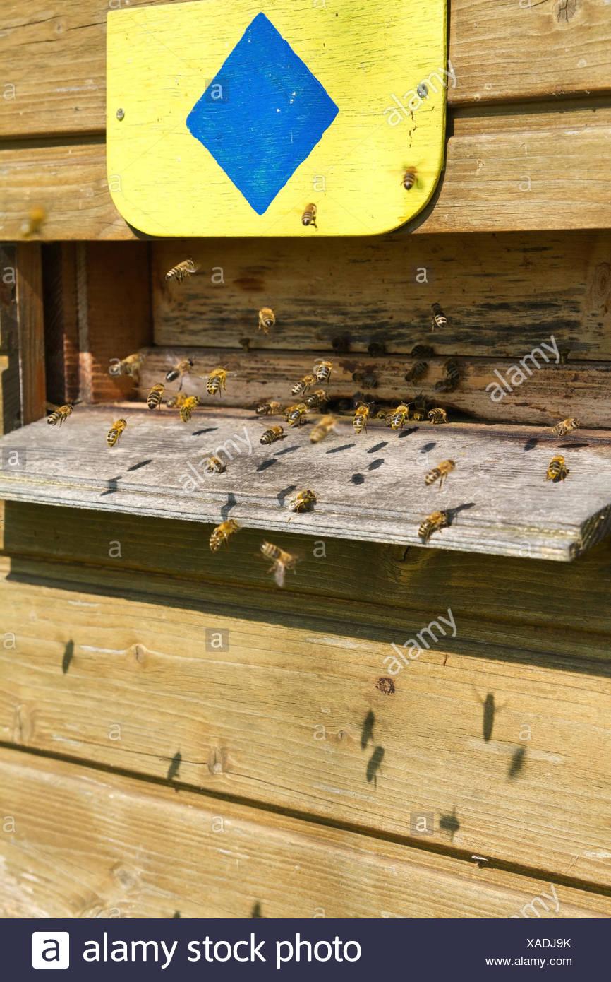 Bienenkolonie Stockfotos & Bienenkolonie Bilder - Alamy