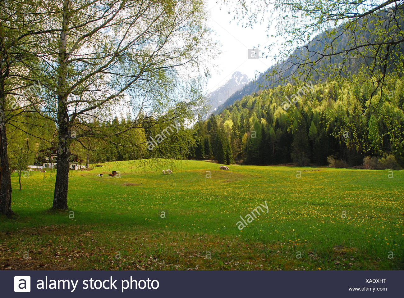 region mittenwald stockfotos region mittenwald bilder alamy. Black Bedroom Furniture Sets. Home Design Ideas