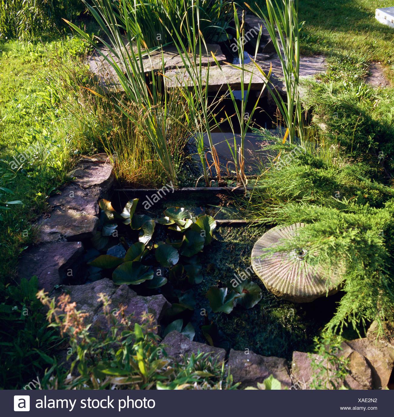 Kleiner Gartenteich Mit Grasern Und Muhlstein Stockfoto Bild