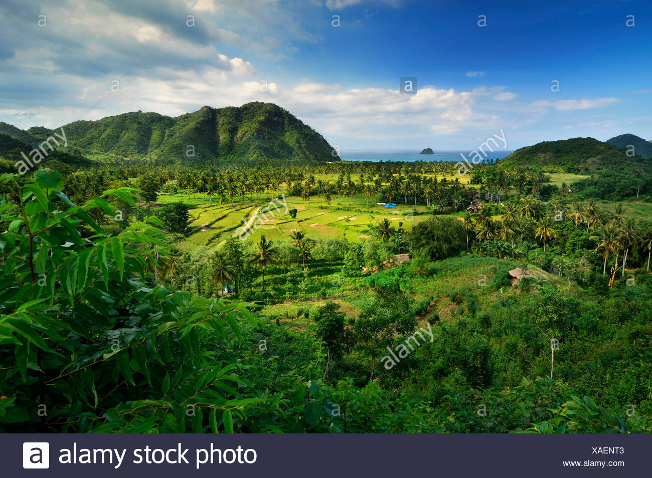 Indonesien, West Nusa Tenggara, erhöhten Blick auf Bauernhof, Meer im Hintergrund Stockbild