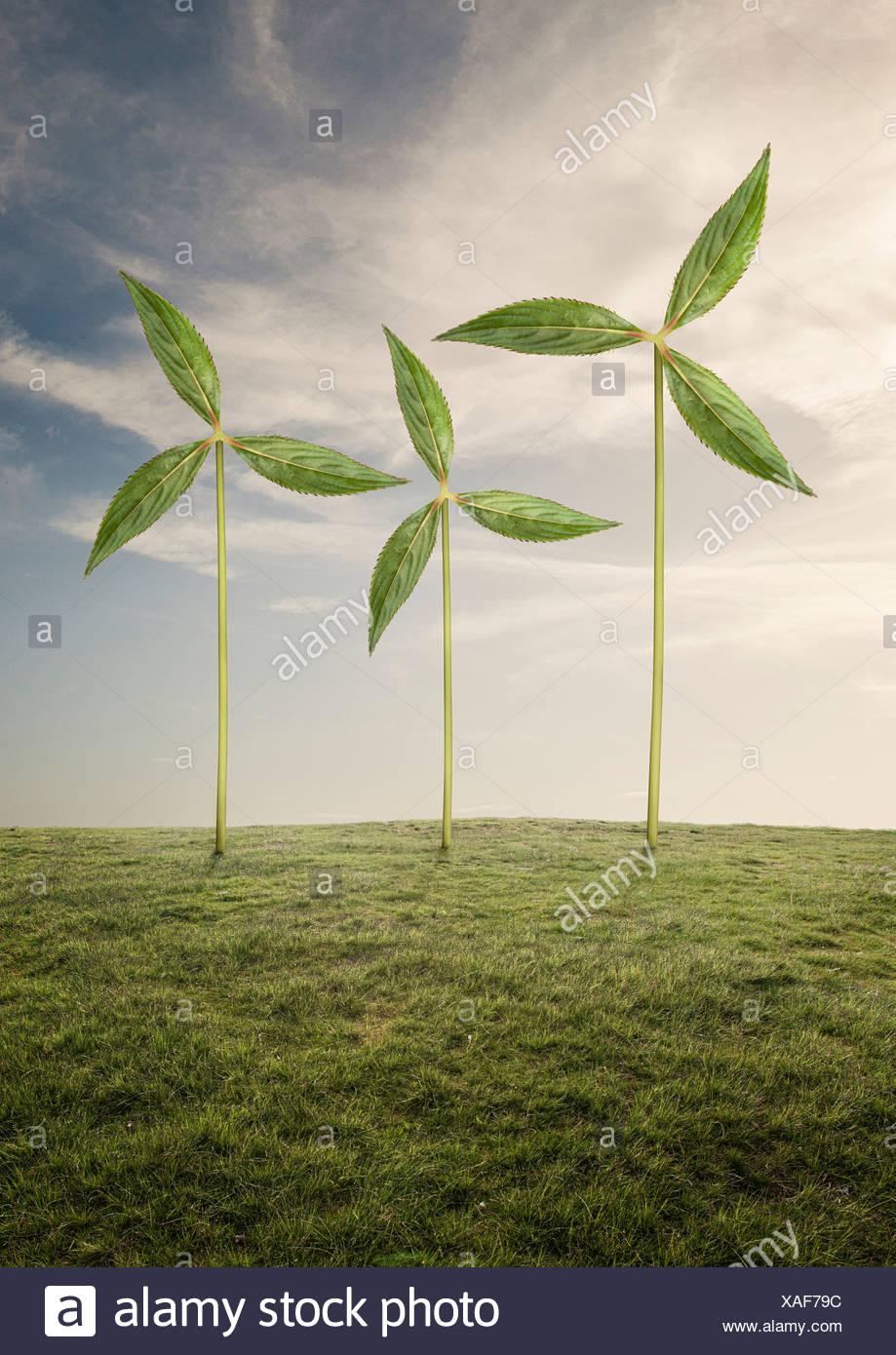 Pflanzen wie Windräder Stockbild