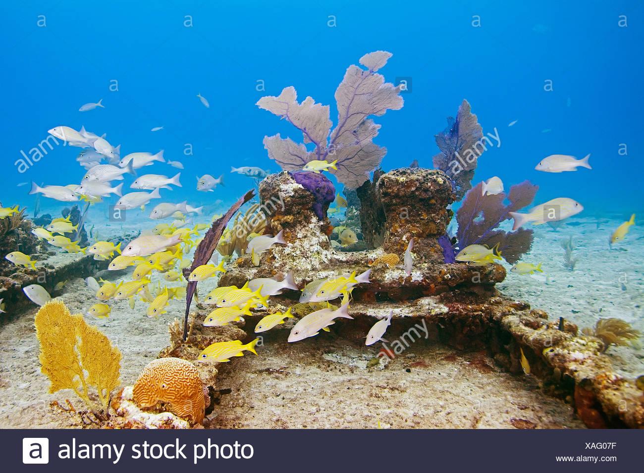 Sea Rods Coral Stockfotos & Sea Rods Coral Bilder - Alamy