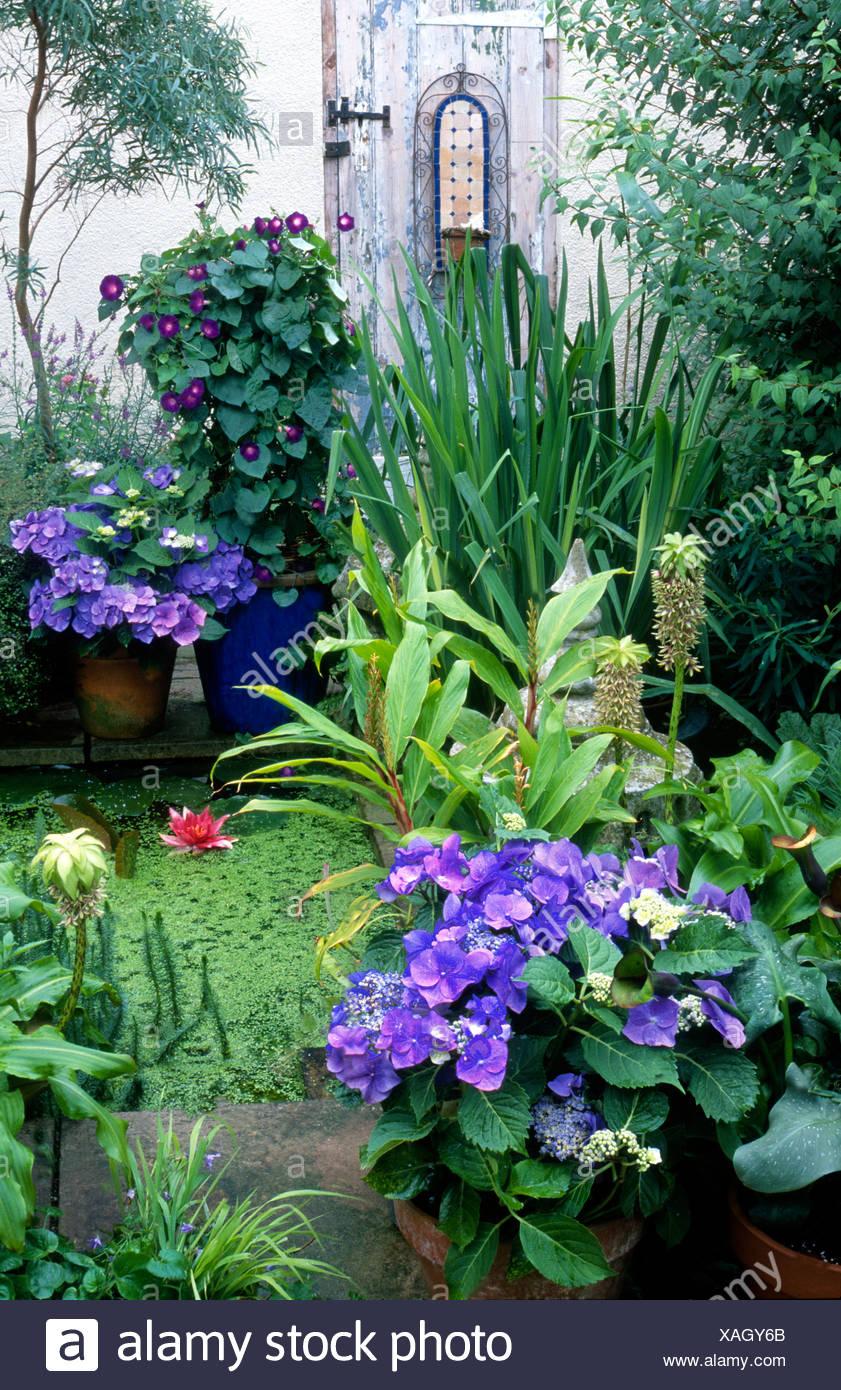 Gartenteich auf Terrasse Stockfoto, Bild: 281885027 - Alamy