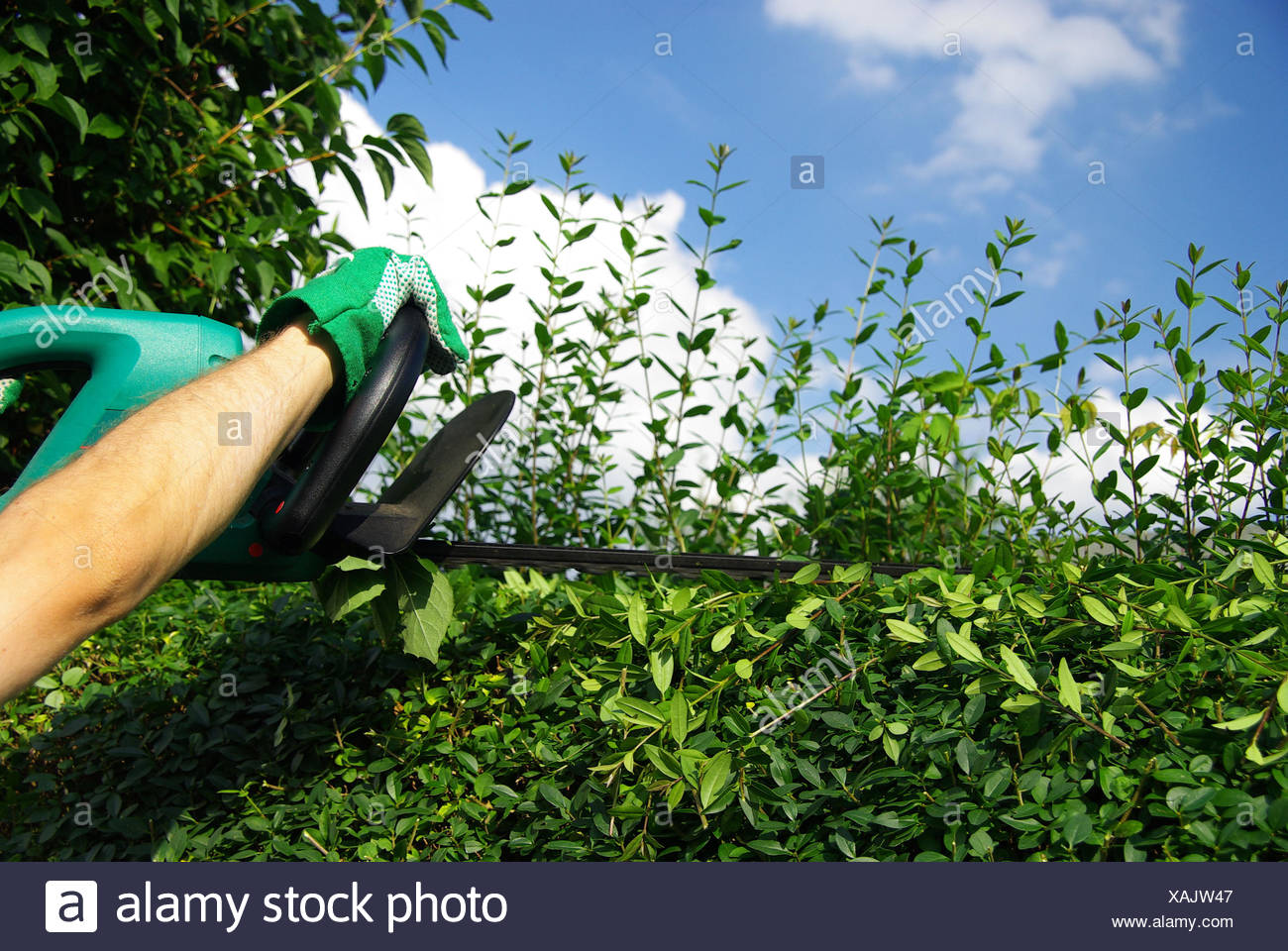 Hand Hecke Geschnitten Stockfoto Bild 281927303 Alamy