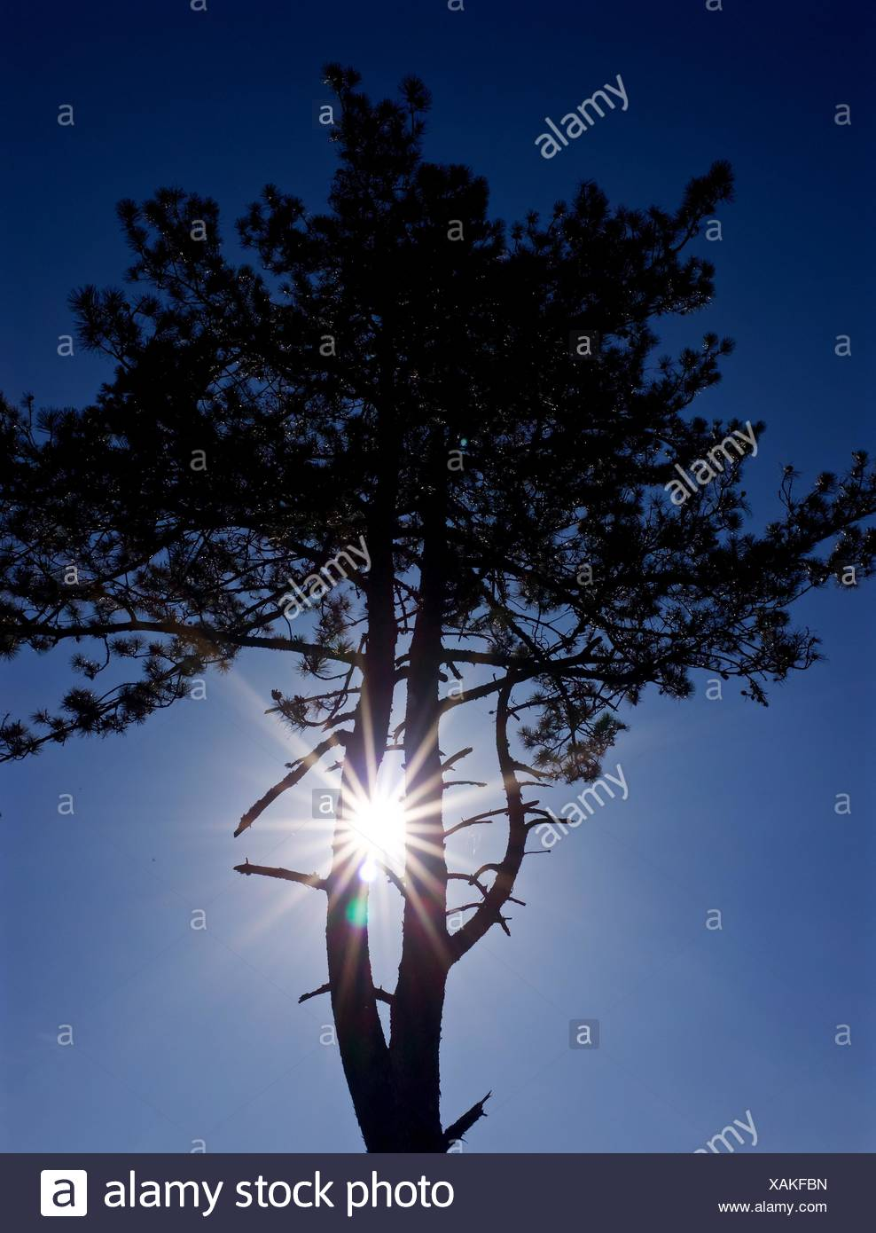 Niedrigen Winkel Ansicht der Baum bei Sonnenaufgang Stockbild