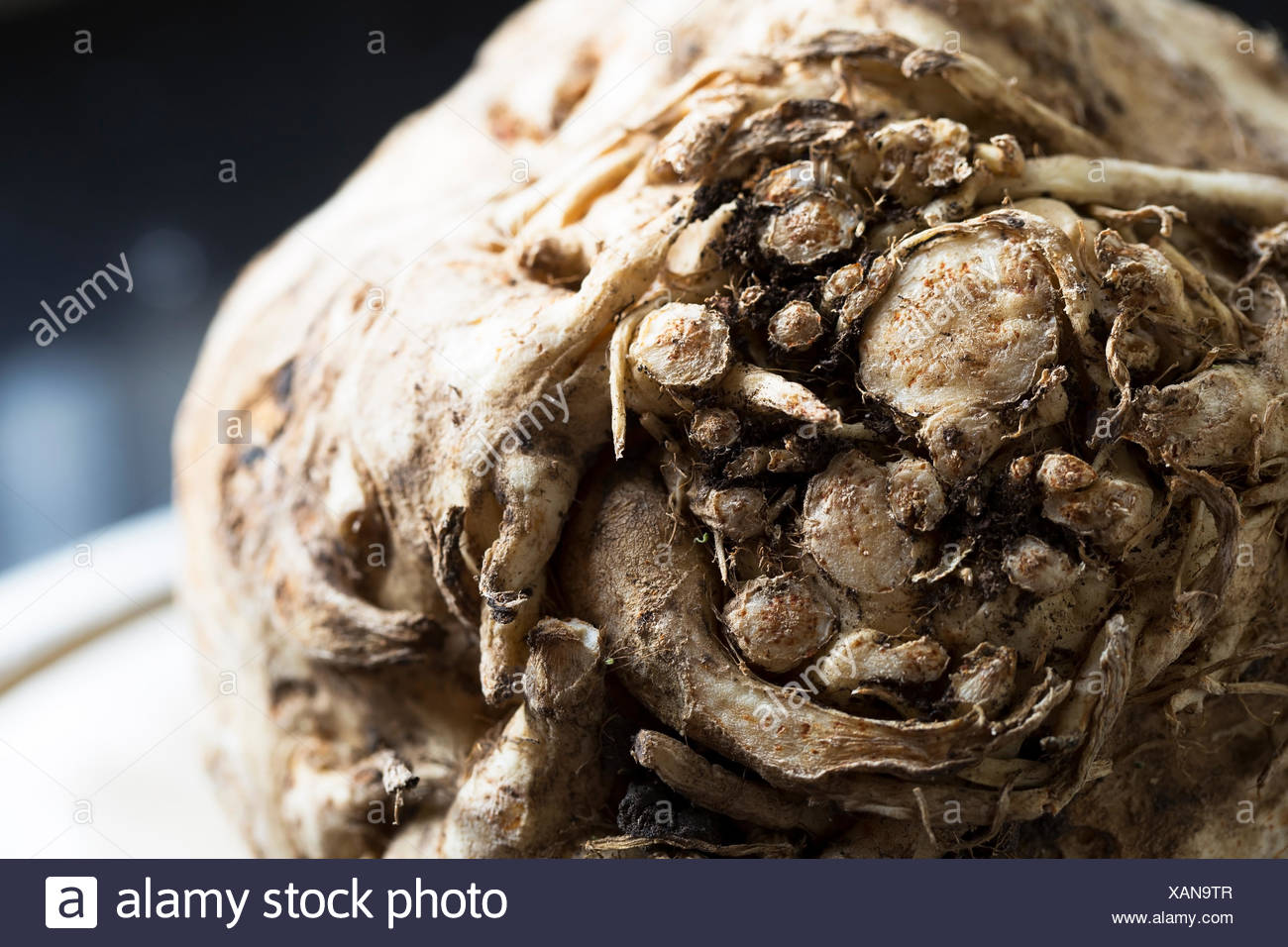 Knollensellerie, Wurzelgemüse vor kurzem geerntet. Stockbild