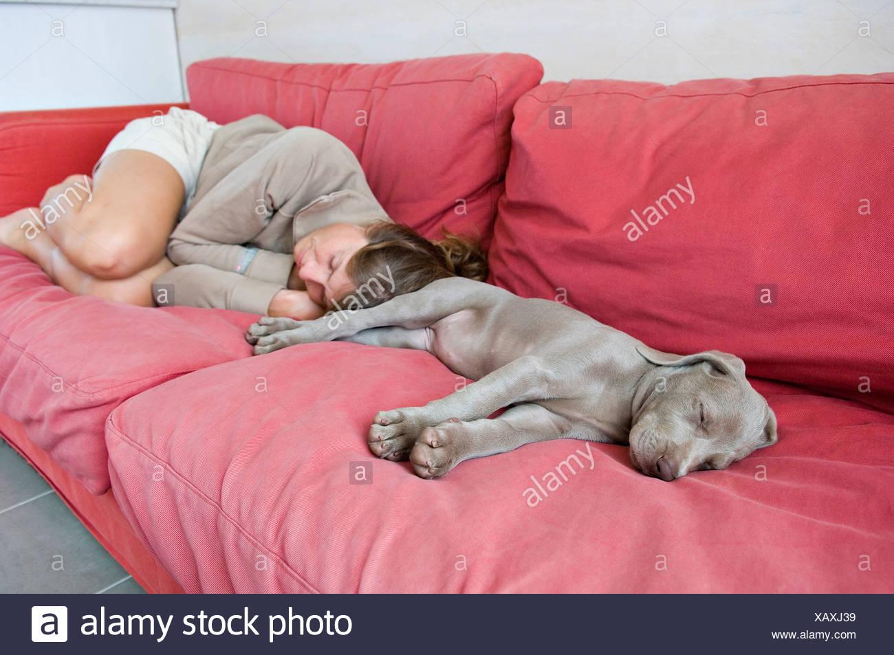 Hund Und Frau Schläft Auf Einer Roten Couch Zu Hause Stockfoto Bild