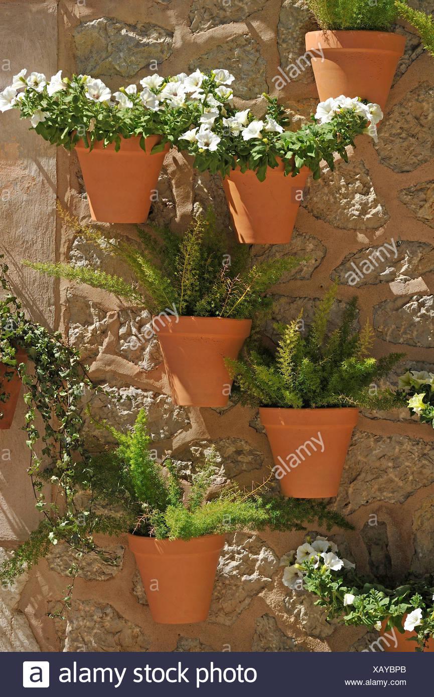 Wand Mit Blumentopfe Mit Weissen Petunien Und Ornamentalen Spargel