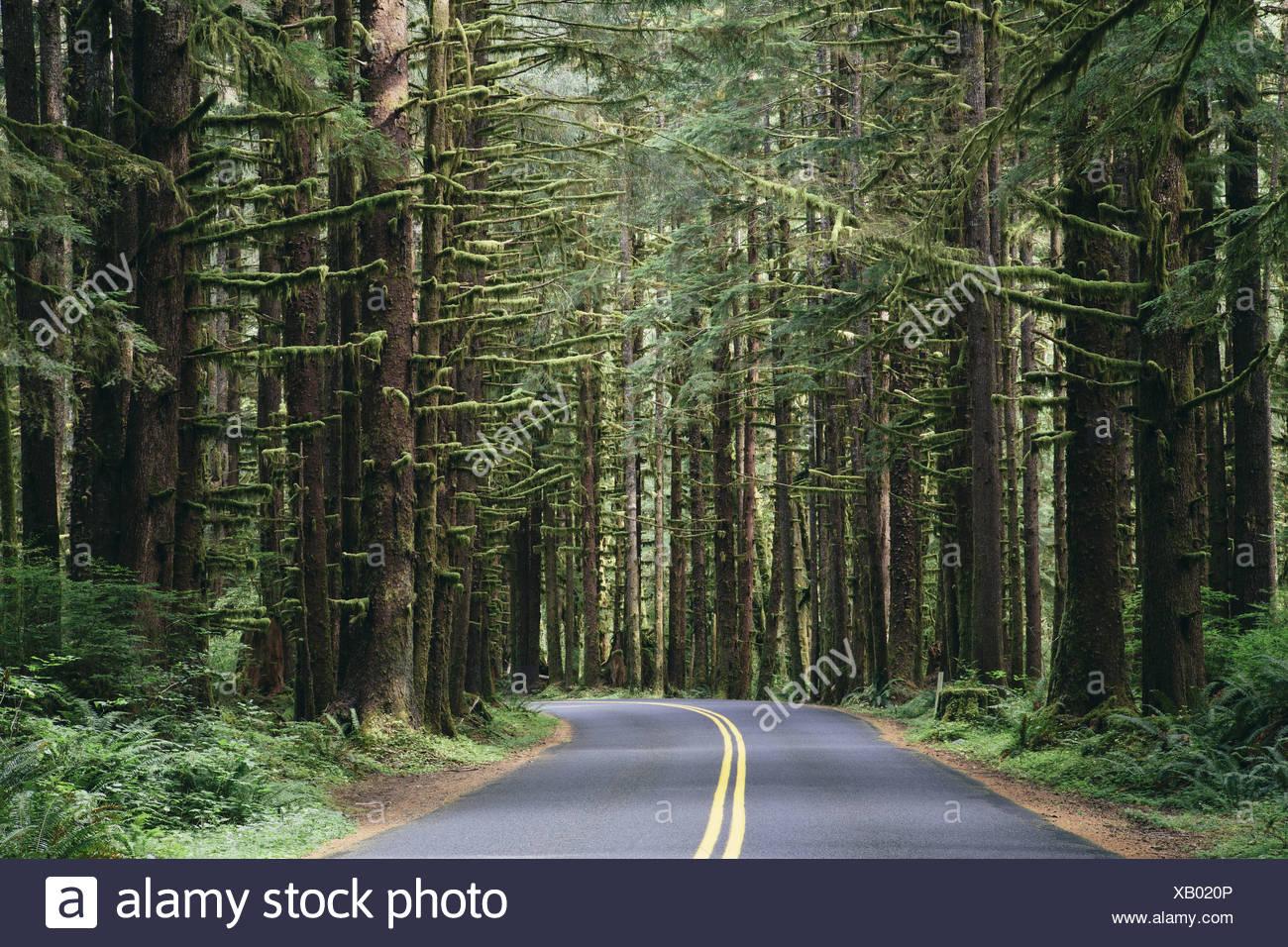 Olympic Nationalpark Washington USA. Straße gemäßigten Regenwald Hoh Regenwald USA Stockbild