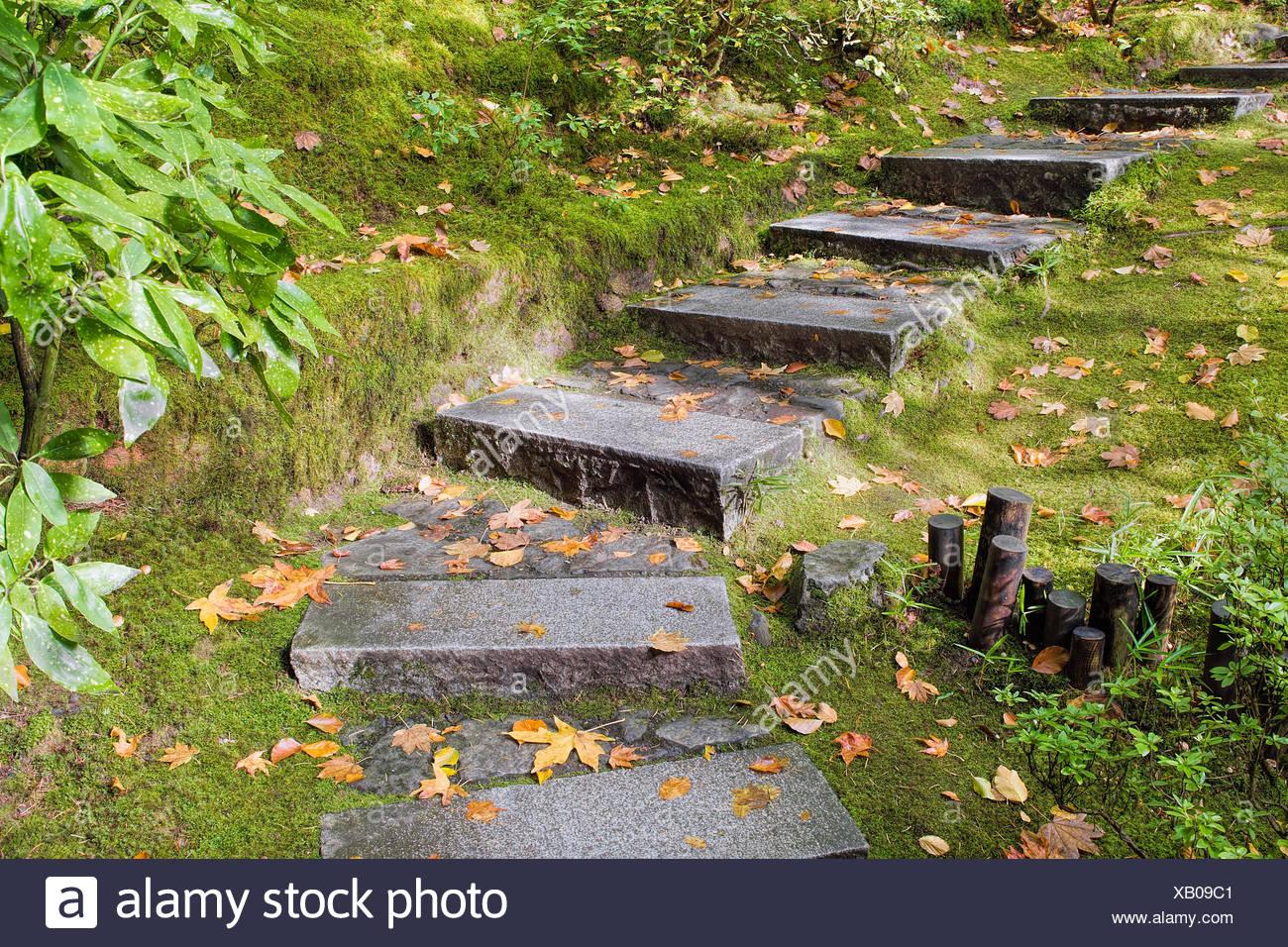 Asiatisch inspirierte japanischer garten granit platten steinstufen mit moos und bl tter fallen - Garten baum fallen ...