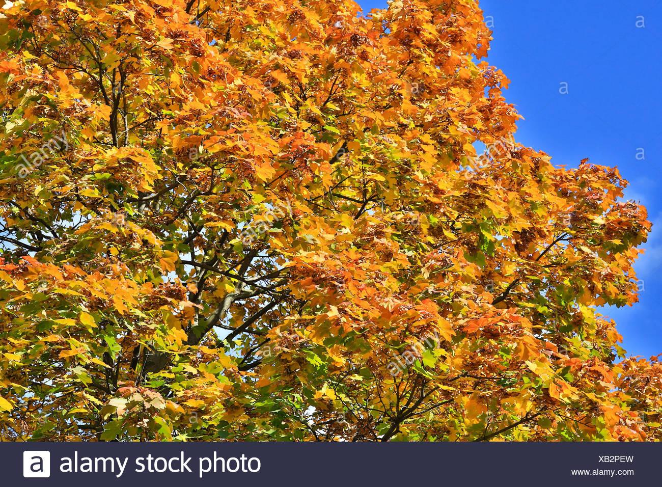 Schön Herbst Färbung Seite Bilder - Druckbare Malvorlagen - amaichi.info