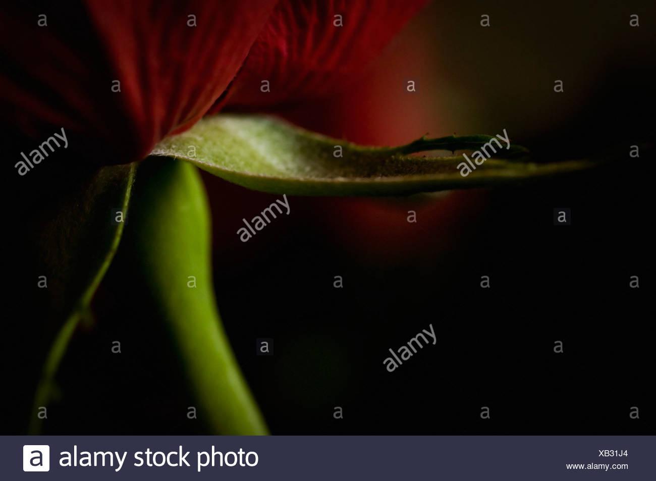 Close-up auf Blume Stockbild