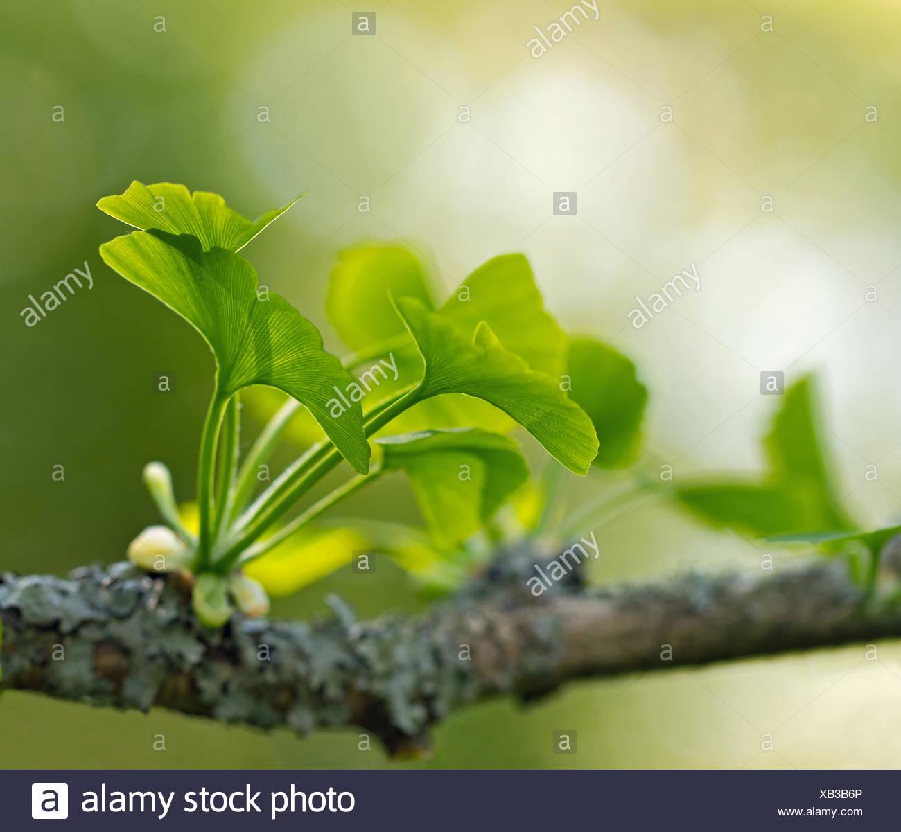 alternative Mittel Blätter Stockbild