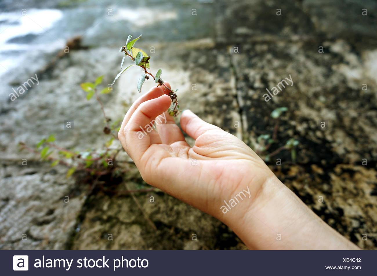 Bild der Person, die Pflanze beschnitten Stockbild