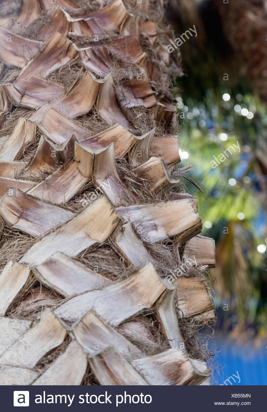 Nahaufnahme von Palm Tree mit detaillierten Struktur Stockbild