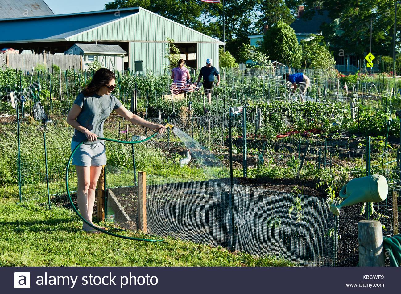 Frau, die ihr Grundstück in einen gemeinsamen Garten Bewässerung. Stockbild