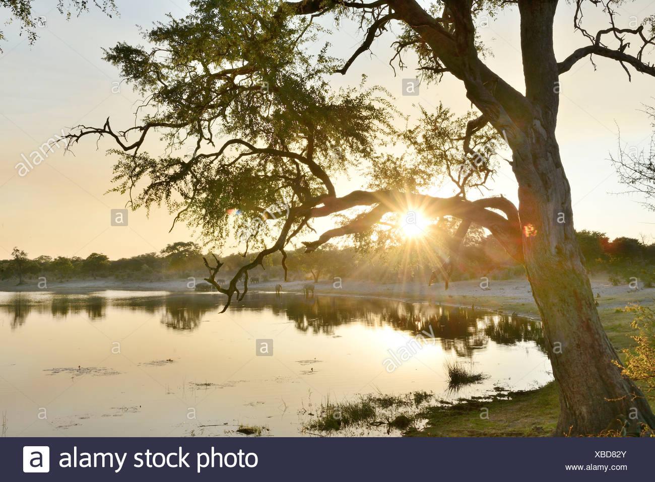 Bwa Bwata Stockfotos Bwa Bwata Bilder Alamy