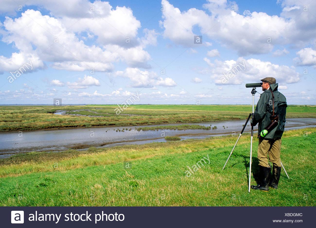 Vogelbeobachtung the wash lincolnshire twitcher zucken twitchers