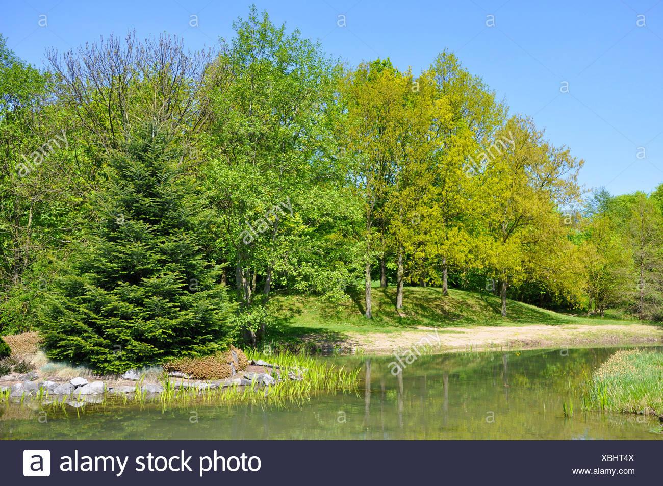 Baum, Bäume, Park, Garten, grün, Büsche, Frühling, Parkway, Gärten ...
