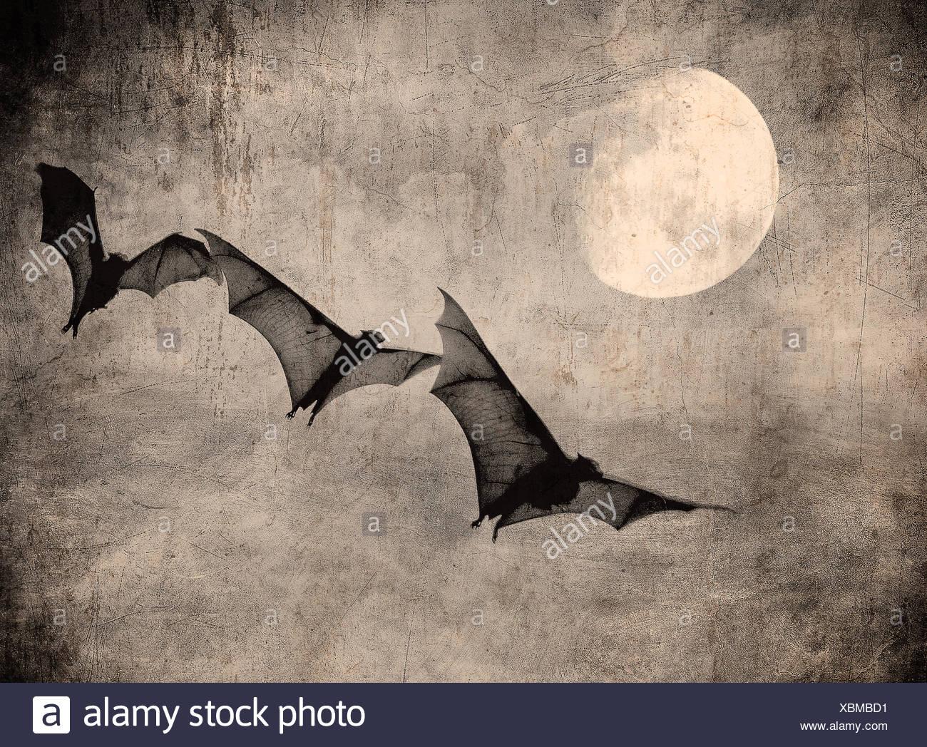 Fledermäuse in den dunklen bewölkten Himmel, perfekte Halloween-Hintergrund Stockbild