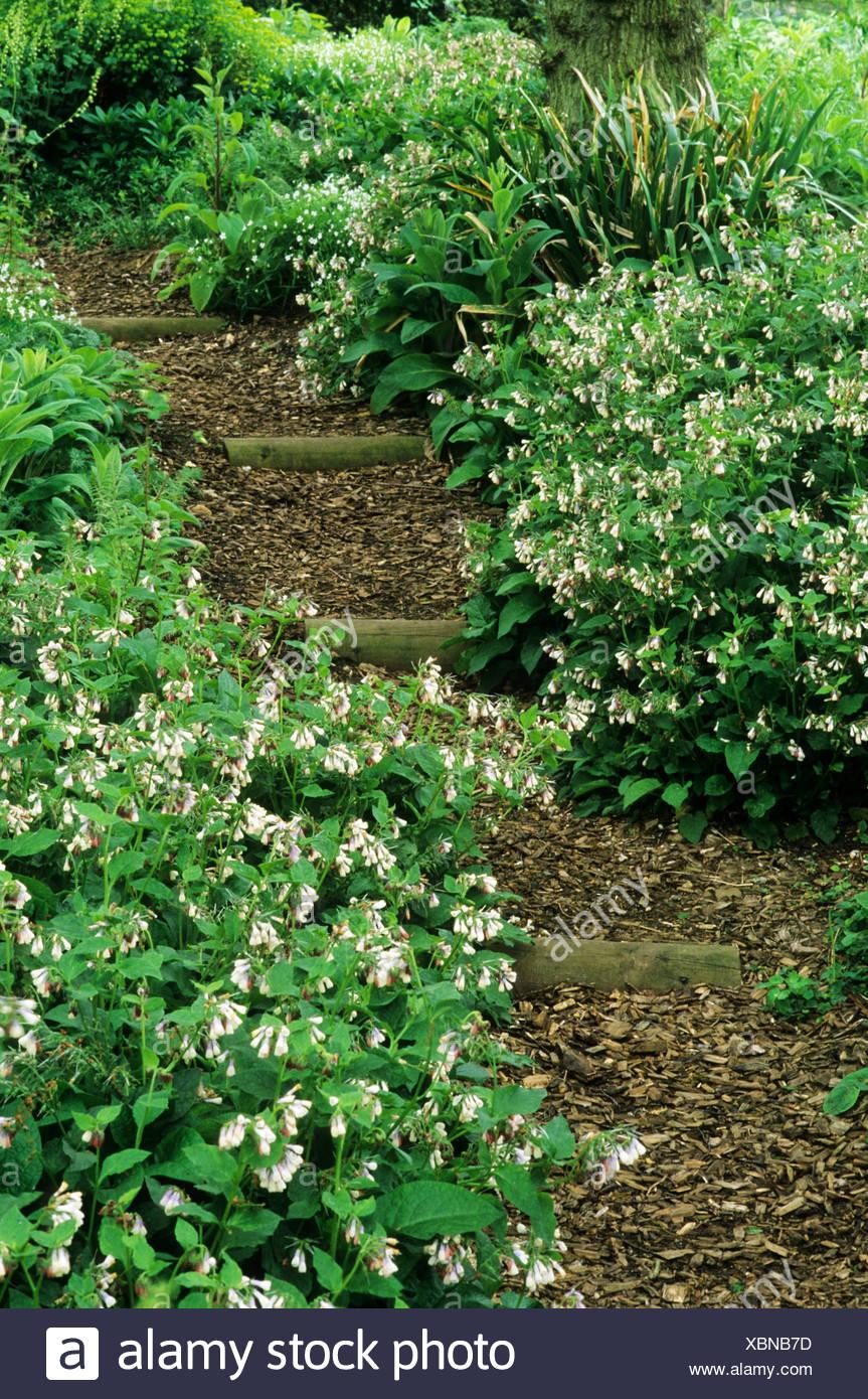 Woodland Garten Rinde Hackschnitzel Pfad Symphytum Pulmonaria
