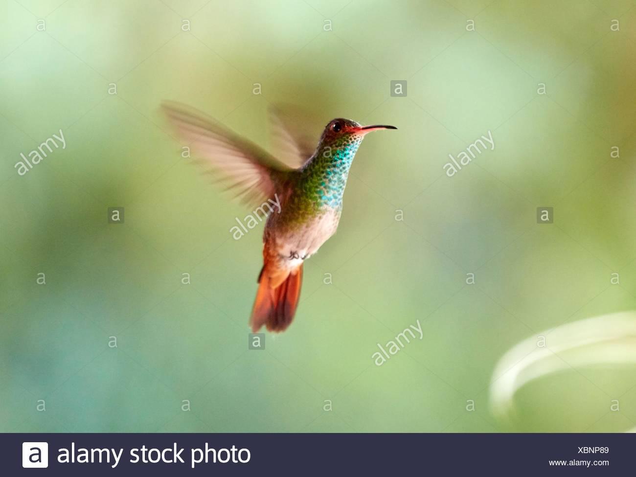 Niedlich Süsse Kolibri Malvorlagen Fotos - Malvorlagen Von Tieren ...