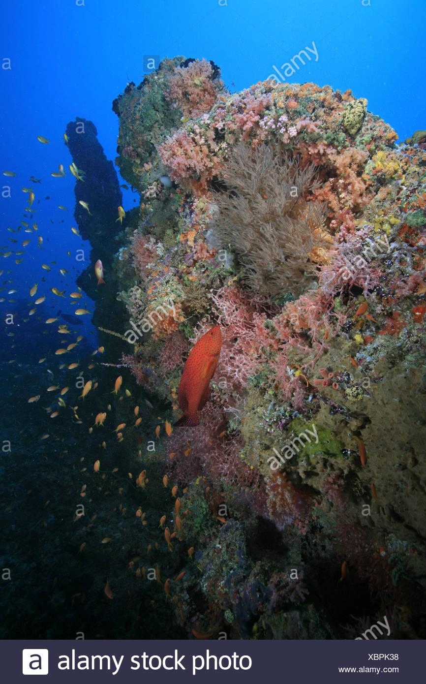 Niedlich Korallenriffe Zum Ausdrucken Galerie - Framing Malvorlagen ...