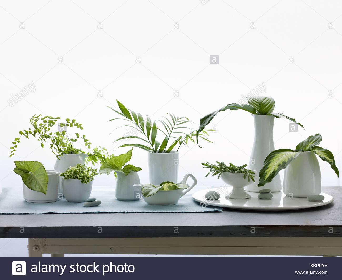 Maryland USA Krüge, Vasen, grüne Blätter und Laub Studioaufnahme Stockbild