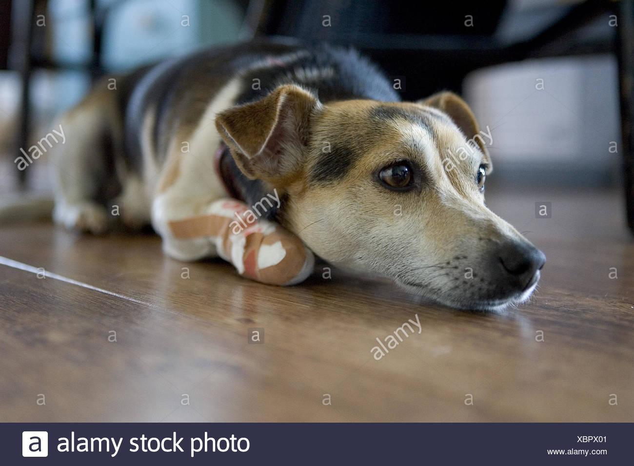 Bein gips hund gebrochen Wadenbeinbruch (Fibulafraktur)