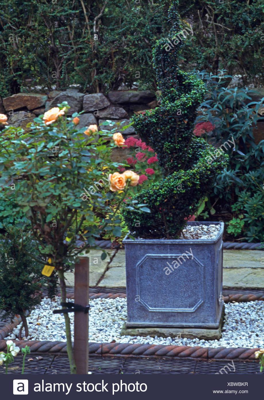 Box Hecke In Schiefer Blumenkasten Auf Kies Bereich Neben Blass