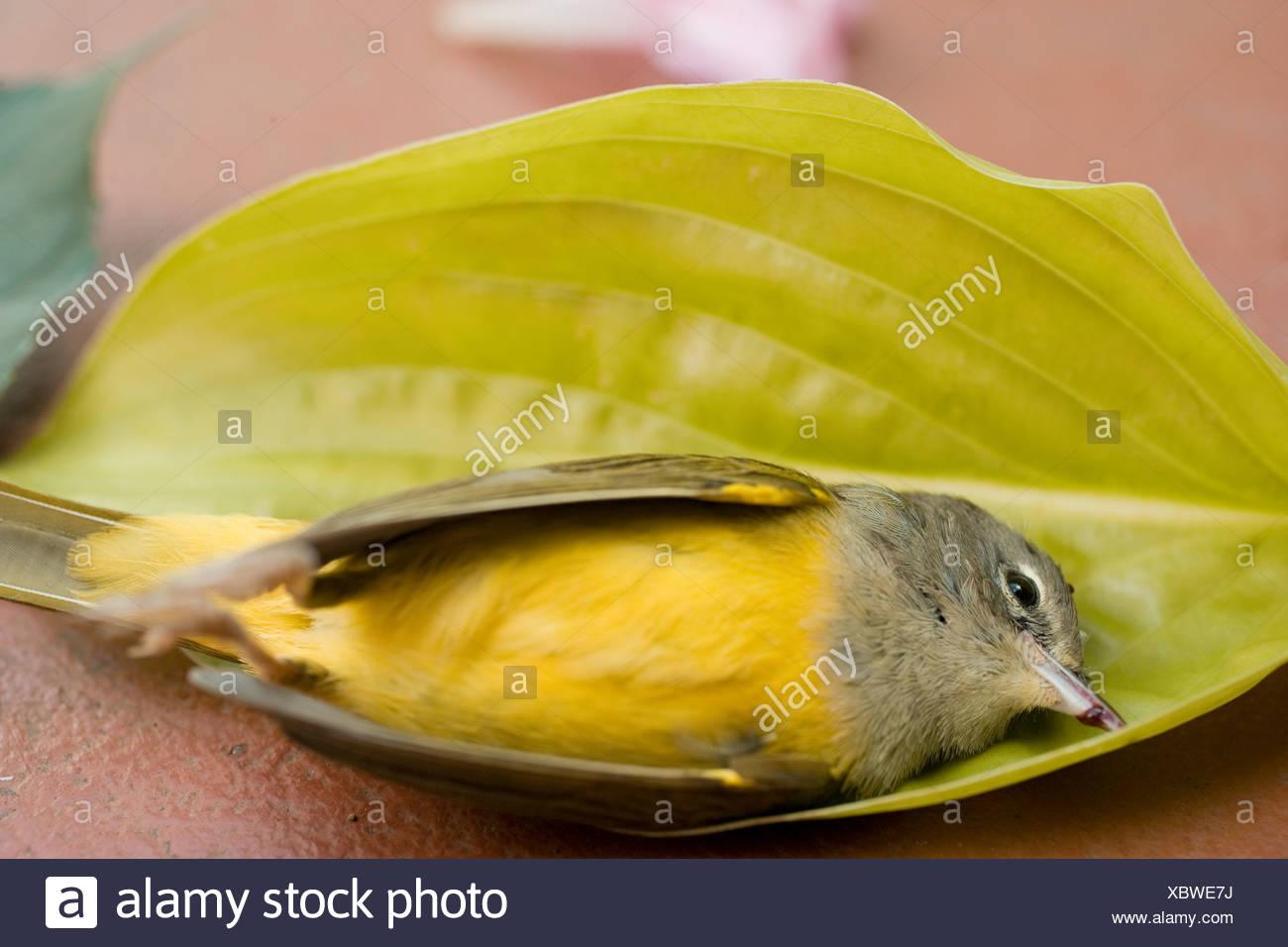 Toter Vogel im Blatt Stockbild