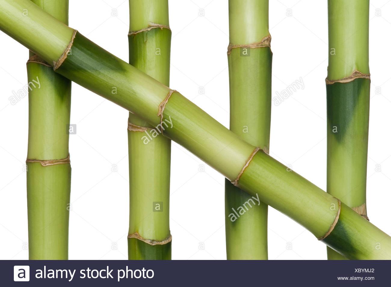 Pflege Wellness Bambus Kosmetik Schonheit Pflege Stabilitat